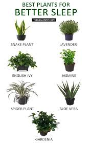 good inside plants best plants to keep in your bedroom to help you sleep physique