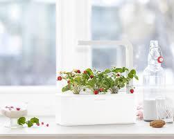 wild strawberry grow fresh food at home click u0026 grow