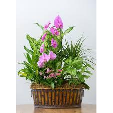 orchid flower arrangements orchid oasis