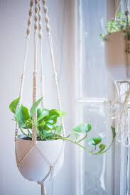 Air Plant Wall Holder Best 25 Plant Hangers Ideas On Pinterest Plant Hanger Macrame