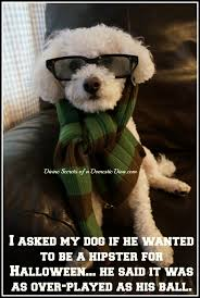 Halloween Meme My Dog The Hipster