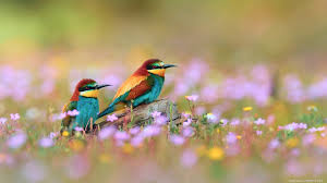 bird wallpapers couple bird wallpaper top wallpapers