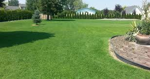 birch u0027s lawn care lawn maintenance cleanups fertilizer