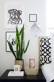 decor plants home decor plants home my web value