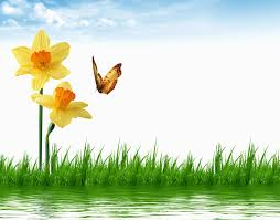 wallpapers butterflies flowers daffodils grass water