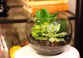 green all year u2013 faux terrariums willard and may outdoor living blog