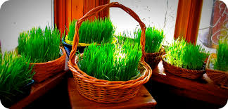 easter basket grass easter basket with real grass gimme the stuff