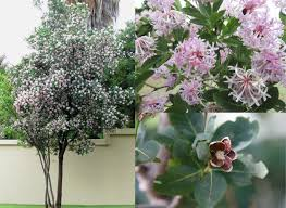 plants native to india top 10 trees to plant in a small garden diy grounded landscaping