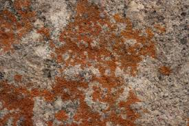 How To Stop Mold In Basement by How To Kill Basement Mold With Vinegar Hunker