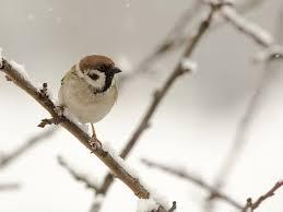 feeding birds in winter tips u0026 strategies saga