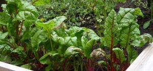 raised bed vegetable garden space for life