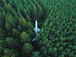 Seen on r pics this plane in the middle of a forest theforest