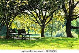 Park Benches Autumn Park Bench Stock Images Royalty Free Images U0026 Vectors