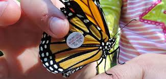 save the monarch butterfly u s fish and wildlife service