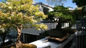bonsai diy workshops at nz flower and garden show stuff co nz