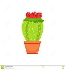 home cactus with blooming flower in the flowerpot flower shop