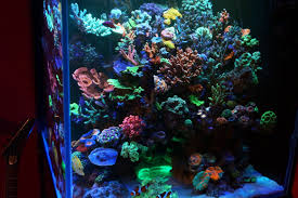 led aquarium lights for reef tanks aquarium led lighting photos best reef aquarium led lighting gallery