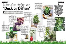 7 indoor plants ideal for your u0027desk or office u0027 social diary