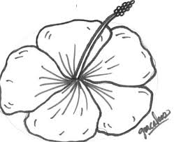 hibiscus drawing cakecentral com