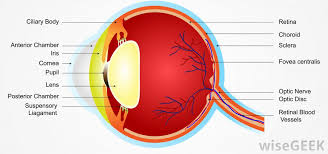 Does Macular Degeneration Always Lead To Blindness What Is Exudative Macular Degeneration With Pictures