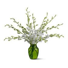 fresh flower delivery dubai winter fresh flower delivery 12 white orchids flower