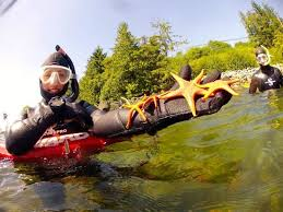 Alaska snorkeling images Where else can you snorkel with orcas picture of snorkel alaska jpg