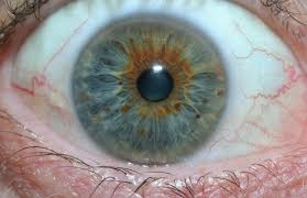 iridology suppliers iriscope iridology