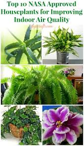 best plants for air quality nasa approved plants best air filtering houseplants 3