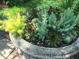 succulent rock garden ideas u2013 sdgtracker