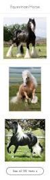 equine home decor equestrian horse