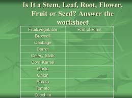 plants ppt download