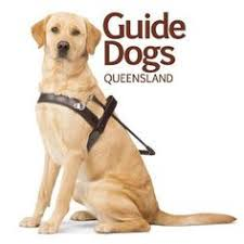 Training A Guide Dog For The Blind Person With Guide Dog Blind U003e U003e U003e Want To Know More Click On The