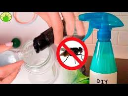 How To Get Rid Of Roaches In The Bathroom Best 25 Gnats In Kitchen Ideas On Pinterest Fruit Flies Vinegar