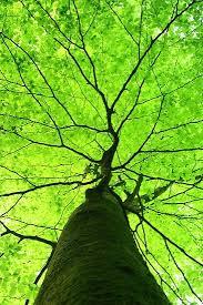 best 25 green trees ideas on twisted tree green