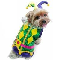 mardi gras dog collars from mardi gras dog collars dog clothes