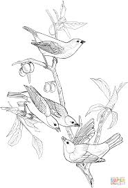 painted bunting birds coloring page free printable coloring pages