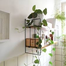bathroom shelf decorating ideas bathroom shelves plant nobailout org