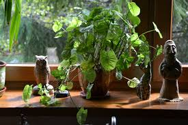 indoor herbs to grow best herbs to grow indoors at home homeaholic net