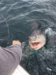 blog labrador fishing charters