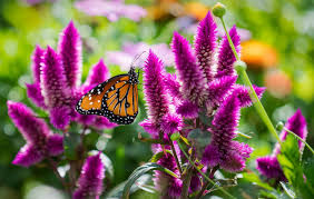 if you plant it they will come native plants trees and flowers
