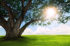 beautiful land scape of big tree plant on green grass field