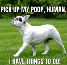 Dog Poop Meme - 12 epic and hilarious dog memes to make you smile dog memes and dog