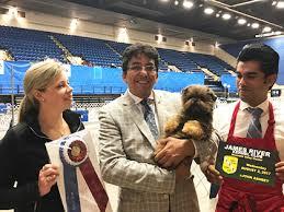 yarrow affenpinscher james river kennel club u2013 wednesday august 2 2017 canine chronicle