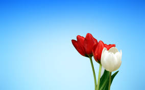 flowers wallpapers page 1 hd wallpapers