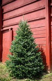 best 25 fresh cut christmas trees ideas on pinterest country
