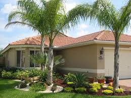 best 25 landscaping with palm trees ideas on pinterest palm