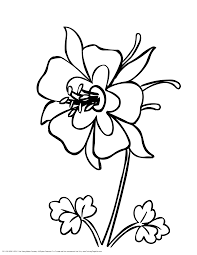 State Flower Of Colorado - colorado state bird and flower coloring page coloring pages for