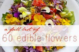 edible photos edible flowers list benefits uses sustainable baby steps