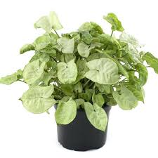 spectacular glamorous common house plants pictures home decor