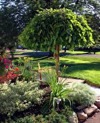 Small Backyard Trees by The 25 Best Weeping Trees Ideas On Pinterest Landscaping Trees